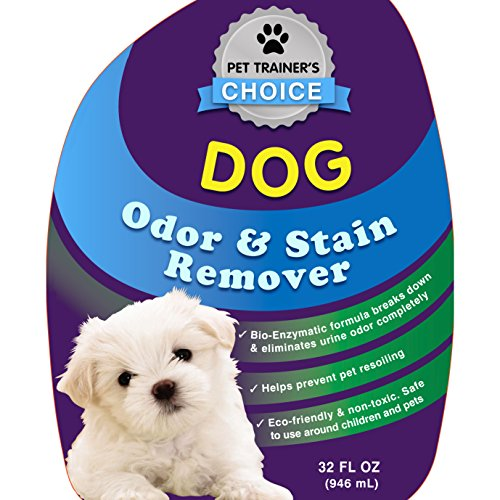 Dog Smell Of Rug: Best Dog Urine Odor Remover